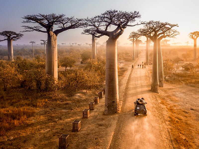 Tsingys y Baobabs