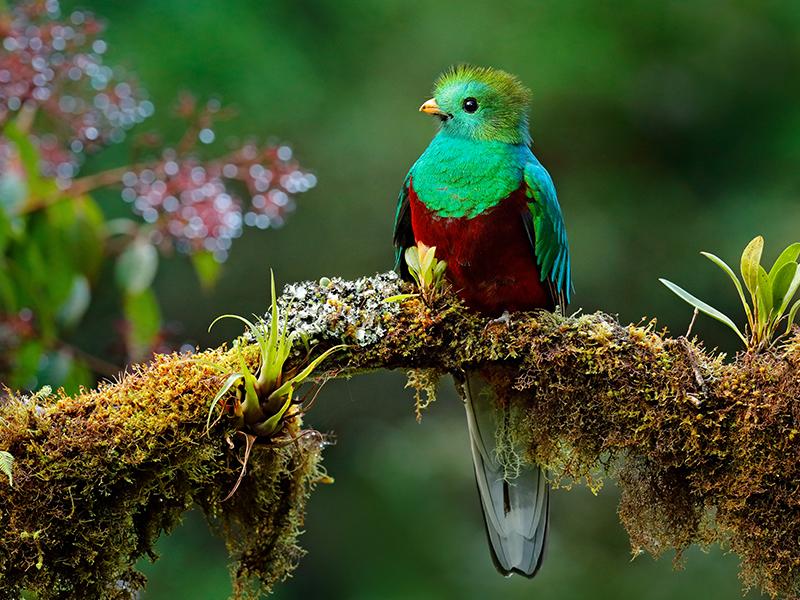 Costa Rica Tropical - Opción Guanacaste