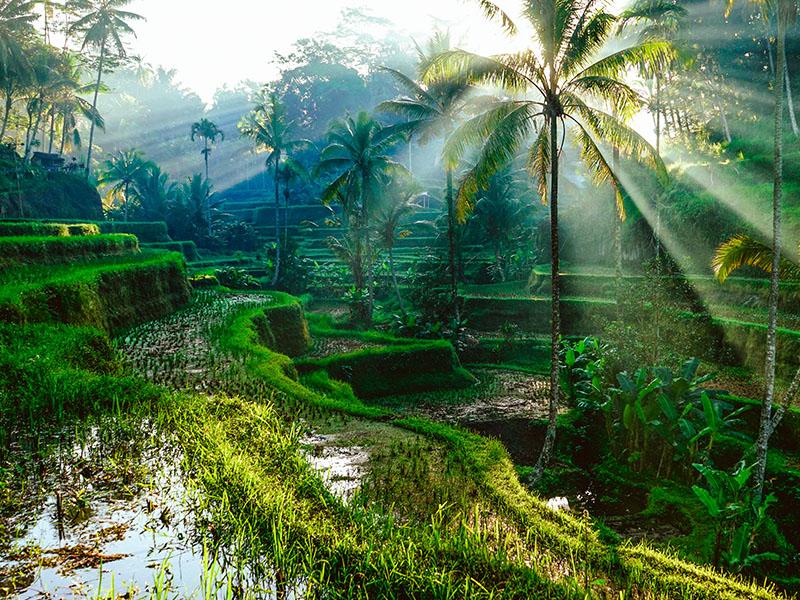 Descubriendo Java y Bali