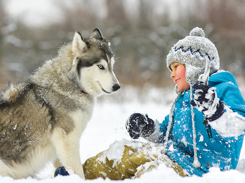 Laponia - Fin de Año