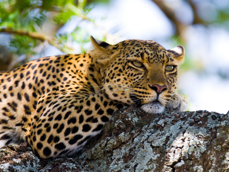 Safari Amani