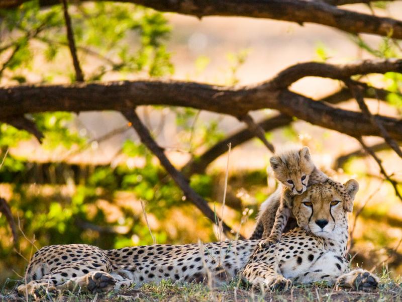 Safari Ngorongoro Ruta 1 - Tour Privado