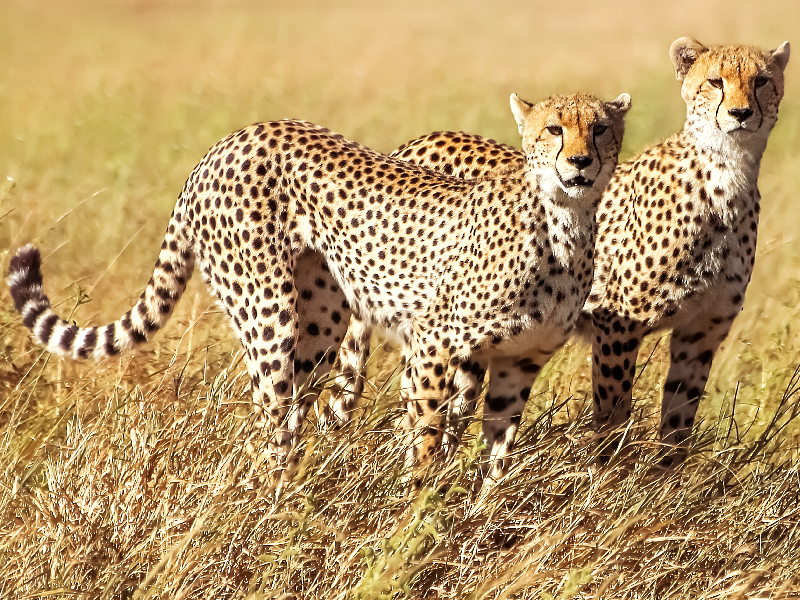 Safari Ngorongoro Ruta 1 - Martes Tour Regular