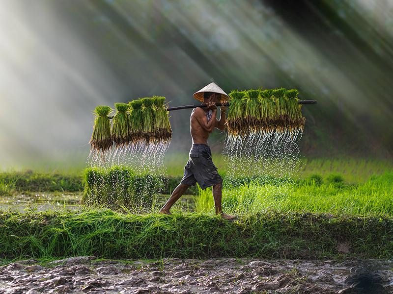 Súper Vietnam - Salidas Garantizadas