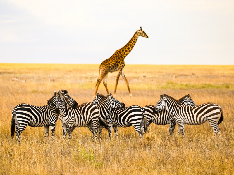 Kenia y Tanzania Esencial